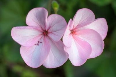 Flowers-1505