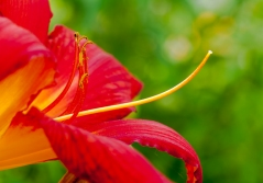 Flowers-1518
