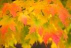 Fall-3084