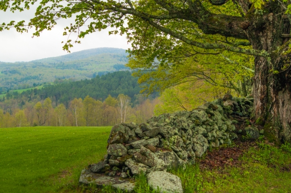• A Peacham Hillside in Spring There are many magical times and places in Vermont, but few are as gorgeous as Peacham on a fine day in May. Add an old stone fence, a big maple and a hillside of spring green and it might be a great place to just spend forever.