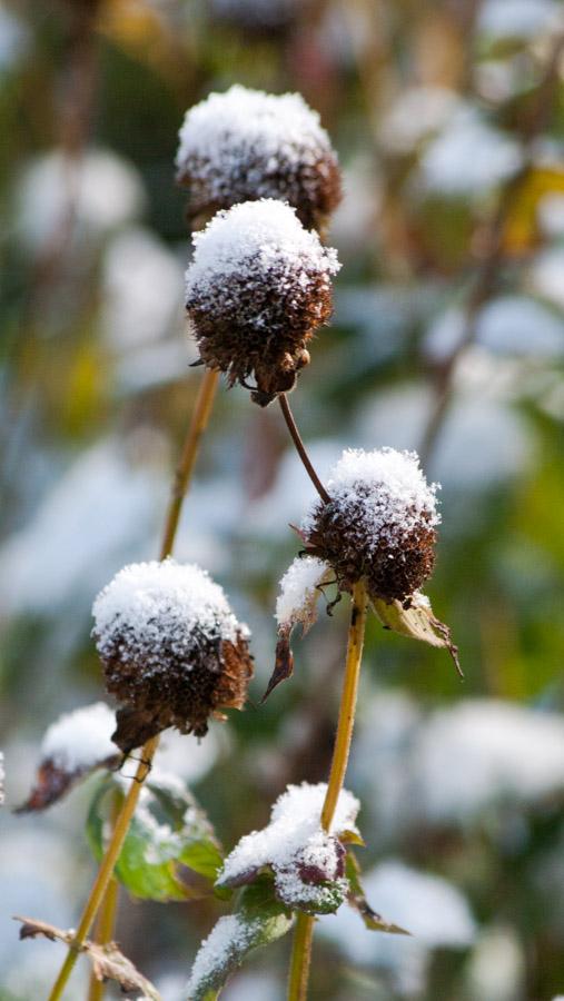 Snow-5653