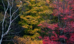 Trees-1653
