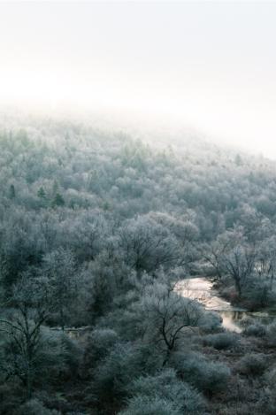 Trees-3630
