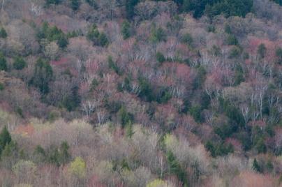 Trees-5647