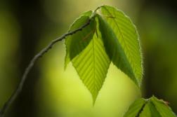 Trees-5921