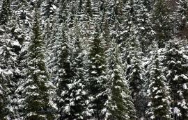 Trees-6369