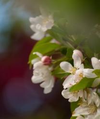 Spring-2555