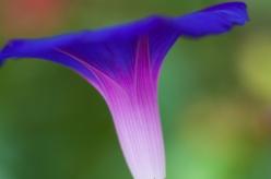 Spring-3693