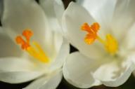 Spring-5991