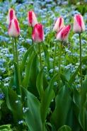 Spring-6165