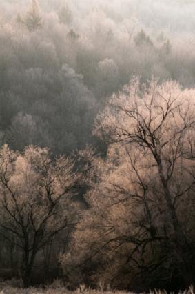 Winter-3695