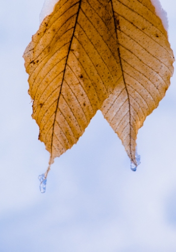 Winter-4329