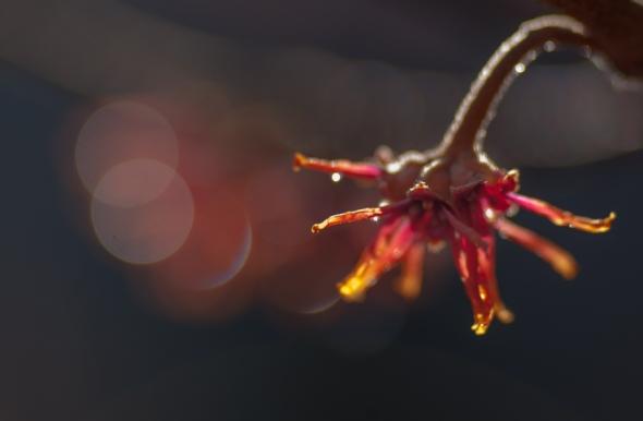 Flower-8208