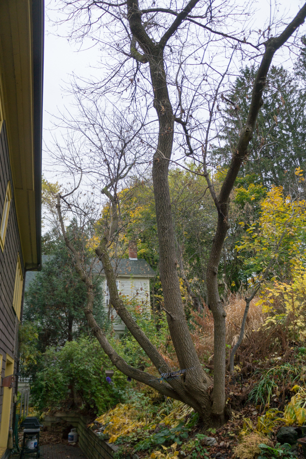 tree-05176