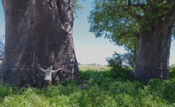 My friend Cindy hugs a 10,000 year old Baobab tree in Botswana. Where will President-elect Trump be in 10,000 years?